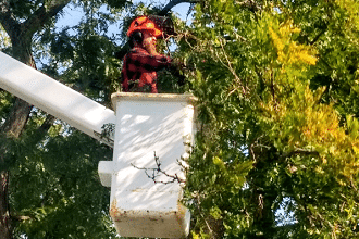 Urban Yeti Tree Removal Service